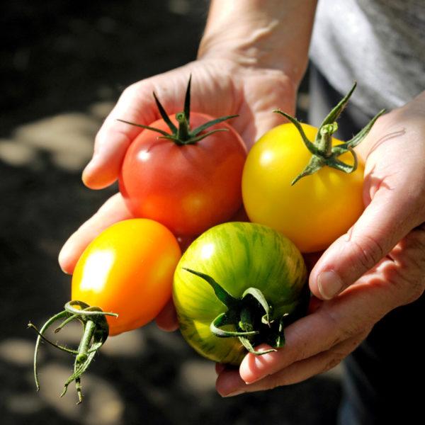 tomate-demarche-certifiee